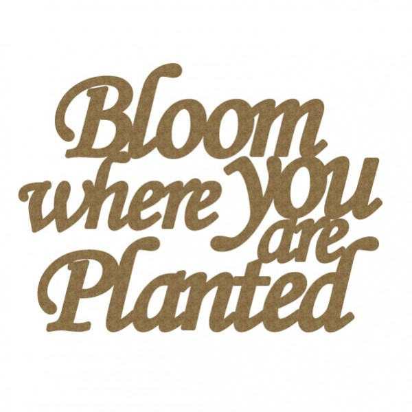 CE Bloom where you are planted